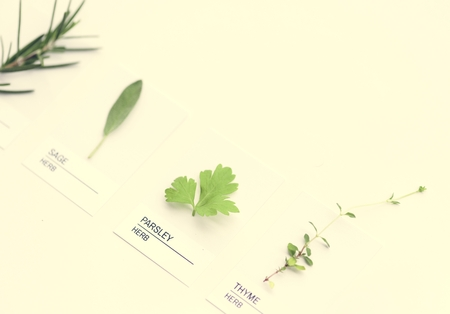 Different kinds of leaves 스톡 콘텐츠