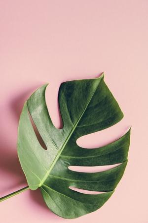 Tropical leaf on pink background 版權商用圖片