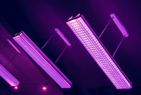 Purple fluorescent lamp hanging from the ceiling