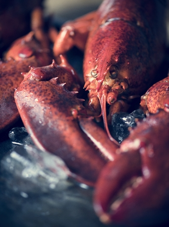 Cooked lobster food photography recipe idea 写真素材