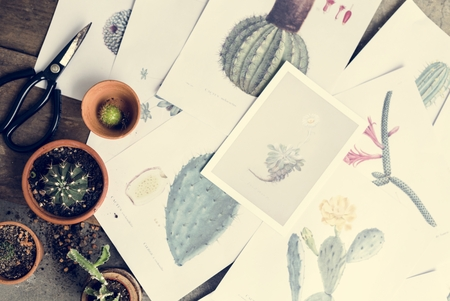 Drawings of different kinds of cactus