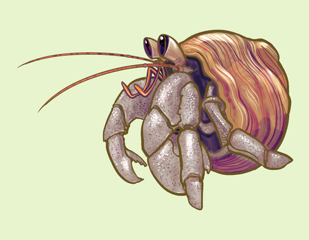 Little cute hermit crab illustration 스톡 콘텐츠