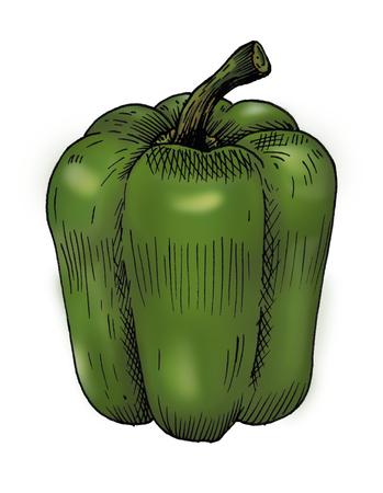 Hand drawn bell pepper Фото со стока - 108614500