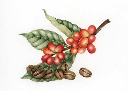 Illustration von Kaffeebohnen Standard-Bild
