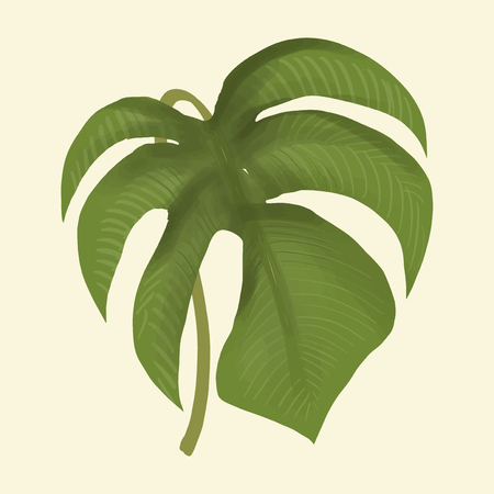 Hand drawn plant leaf isolated Banco de Imagens - 108397058