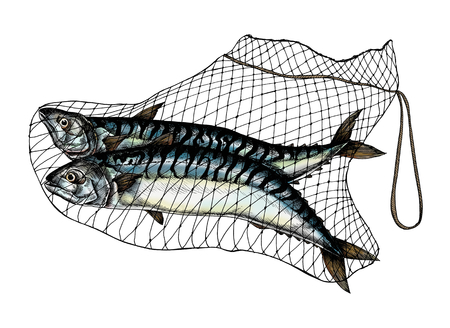 Hand drawn catched mackerels on the net Stock fotó - 108391165
