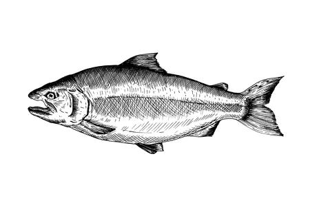 Hand drawn salmon fish Banco de Imagens - 108391910