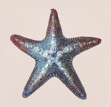 Hand drawn sea starfish isolated Banque d'images - 108390677