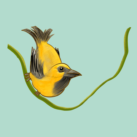 Illustration of a bird Stock Photo