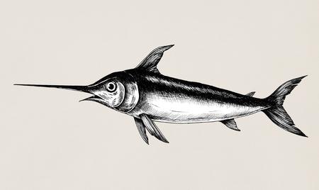 Hand drawn swordfish isolated Foto de archivo - 108381398