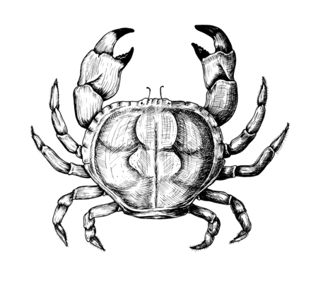 Hand drawn crab isolated Stok Fotoğraf - 108380540