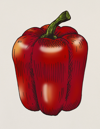 Hand drawn bell pepper Фото со стока - 108377892