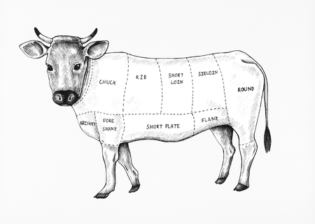 Hand drawn cut of beef