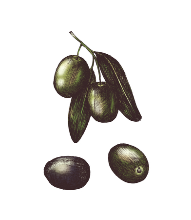 Hand drawn olives Stock Photo