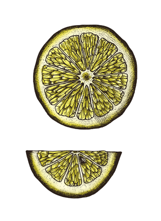 Hand drawn slice of lemon Banco de Imagens - 109218088