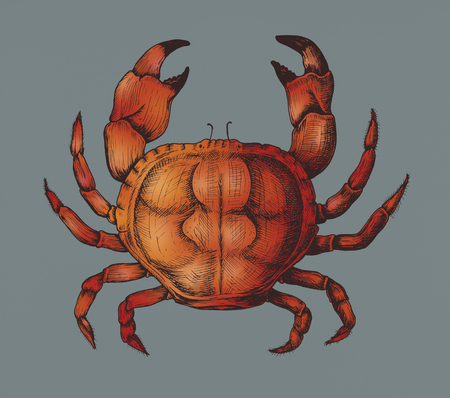 Hand drawn crab isolated Stok Fotoğraf - 109218401
