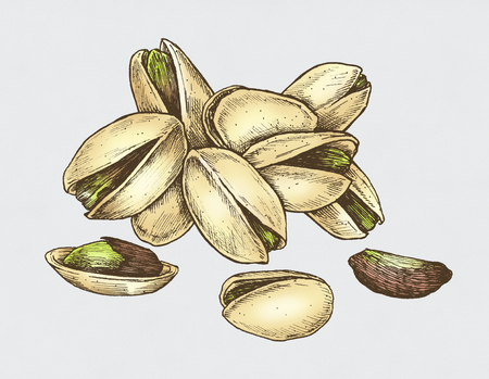 Hand drawn pistachio isolated