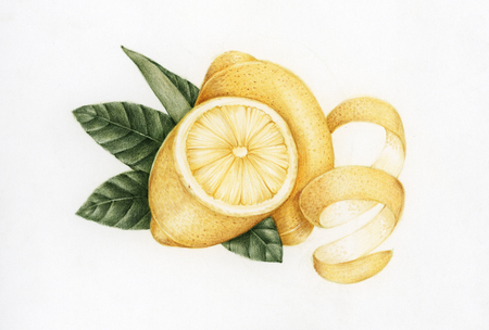 Illustration drawing style of lemon