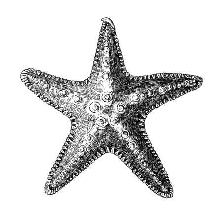 Hand drawn sea starfish isolated 스톡 콘텐츠 - 109291536