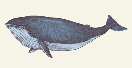 Hand drawn blue whale retro style Stock fotó