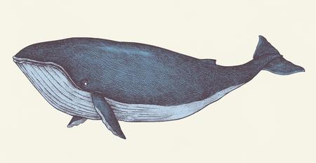 Style rétro de baleine bleue dessiné à la main