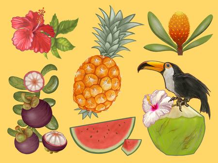 Tropical fruits and flower illustration Banque d'images - 109445275