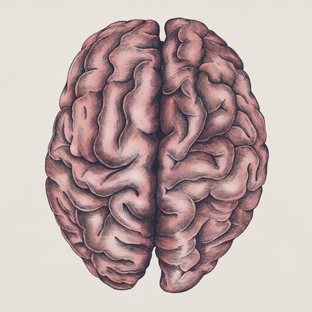 Brain internal organ vintage style illustration