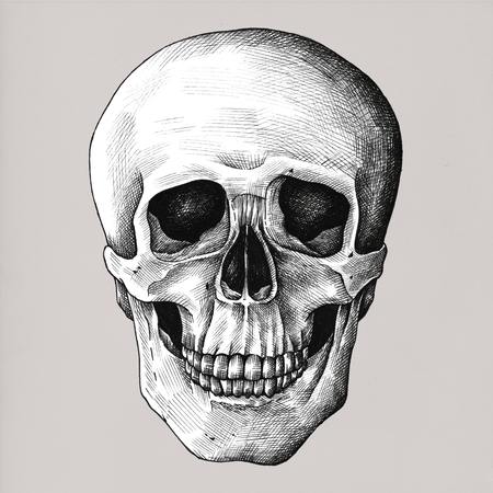 Hand drawn skull isolated on background Archivio Fotografico - 109371730