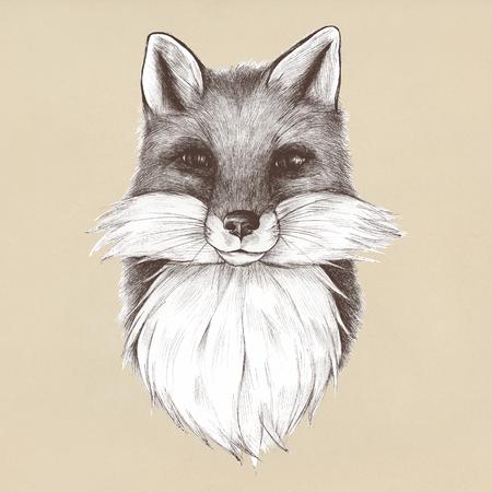 Dibujado a mano zorro aislado sobre fondo