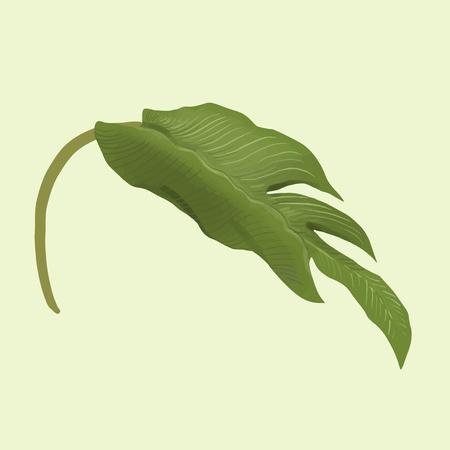 Illustration of a plant leaf Zdjęcie Seryjne - 116166800