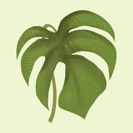 Illustration of a plant leaf Banco de Imagens - 116166804