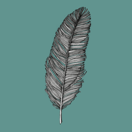Hand drawn feather isolated on background Stock Photo