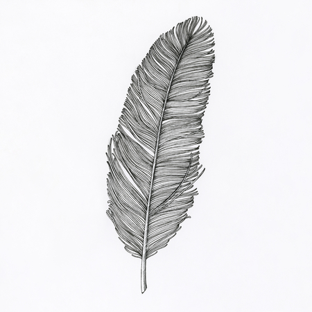 Hand drawn feather isolated on background