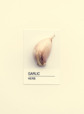 Garlic herb Stockfoto