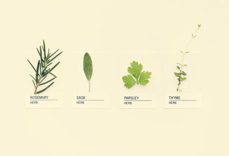 Different kinds of herbs