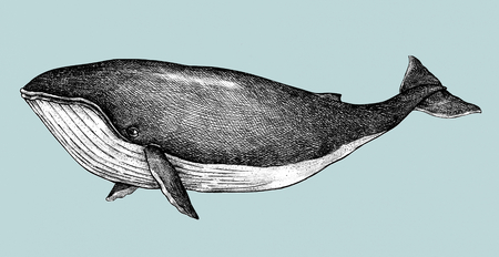 Hand drawn blue whale retro style Foto de archivo