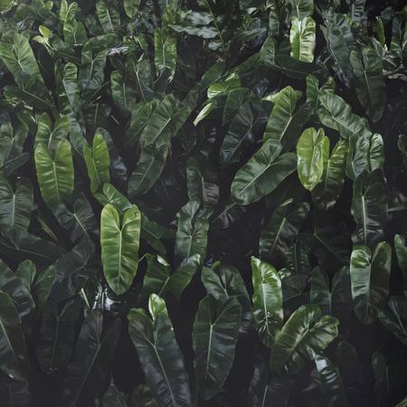 Closeup of green leaves background Banco de Imagens