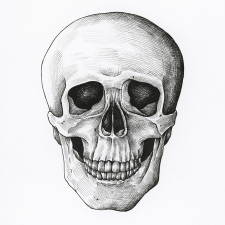 Hand drawn skull isolated on a white background.