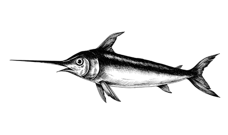 Hand drawn swordfish isolated on a white background