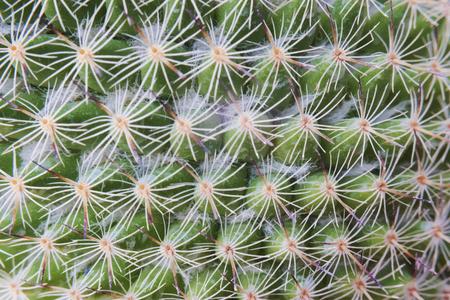 Closeup of cactus plant wallpaper Banco de Imagens - 109713193