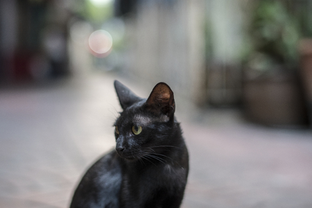 Closeup of black cat sitting alone Archivio Fotografico