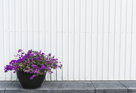 Flowers by a zinc wall Stock Photo
