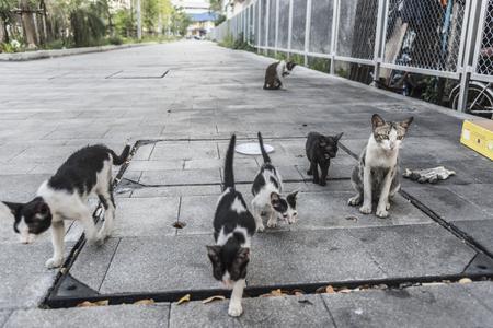 Grupo de lindos gatitos y gatos callejeros