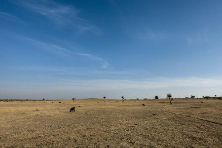 Thar Desert in Rajasthan India
