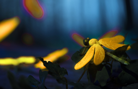 Glowing insects in the night forest Stock fotó