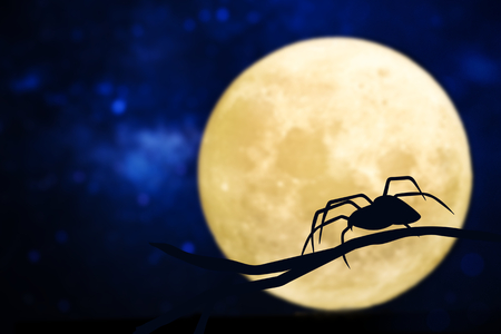 Spider silhouette over a full moon