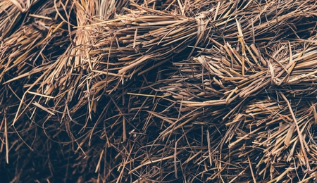 Dried hay or straw with grains