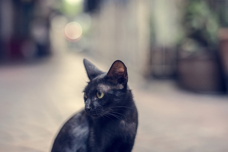 Closeup of black cat sitting alone Stock Photo