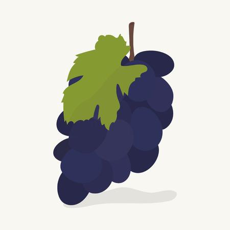 Hand drawn grapes fruit illustration