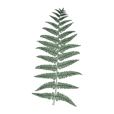 Illustration of fern frond leaf 版權商用圖片